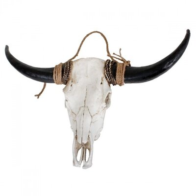 Harms Import Buffalo Horns Wall Decor