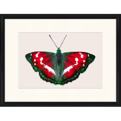 LivCorday Butterfly Series 47 Framed Graphic Art