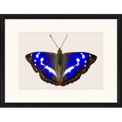 LivCorday Butterfly Series 46 Framed Graphic Art