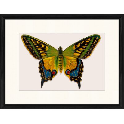 LivCorday Butterfly Series 43 Framed Graphic Art