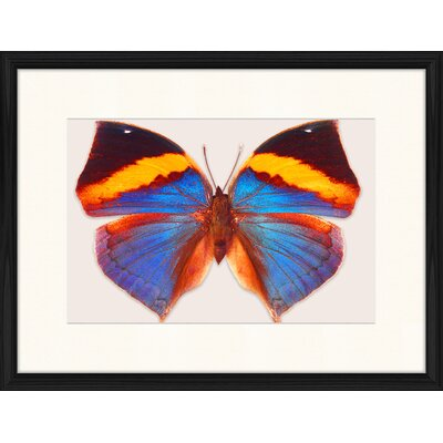 LivCorday Butterfly Series 29 Framed Graphic Art