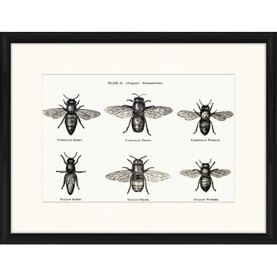 LivCorday Dung Flies Framed Graphic Art