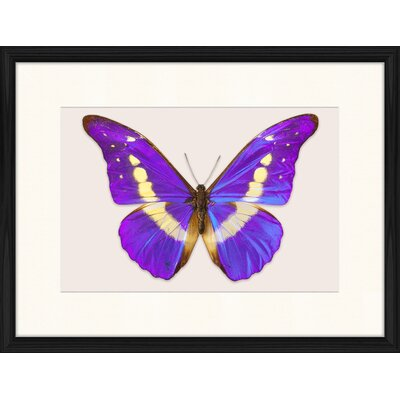 LivCorday Butterfly Series 39 Framed Graphic Art