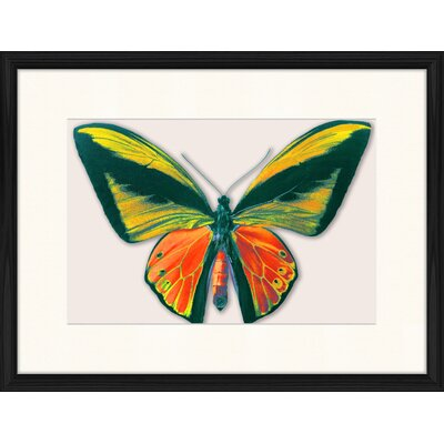LivCorday Butterfly Series 22 Framed Graphic Art