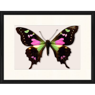 LivCorday Butterfly Series 5 Framed Graphic Art