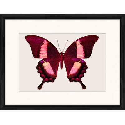 LivCorday Butterfly Series 42 Framed Graphic Art