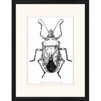 LivCorday Large Beetle Framed Graphic Art