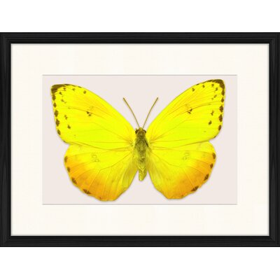 LivCorday Butterfly Series 2 Framed Graphic Art