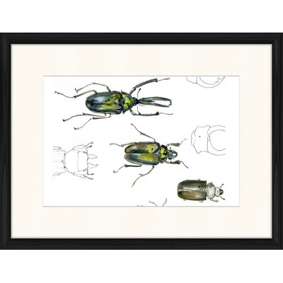 LivCorday Beetle Series 2 Framed Graphic Art