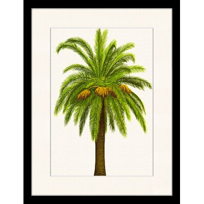 LivCorday Vintage Palm Illustration 2 Framed Graphic Art