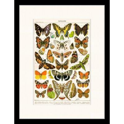 LivCorday Vintage Butterfly Illustration 2 Framed Graphic Art