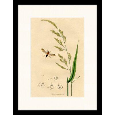 LivCorday Vintage Plant Illustration 2 Framed Graphic Art