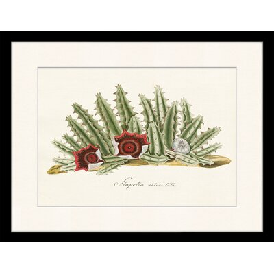 LivCorday Vintage Cactus Plant Framed Graphic Art