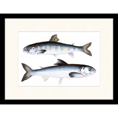LivCorday Fishes Framed Graphic Art