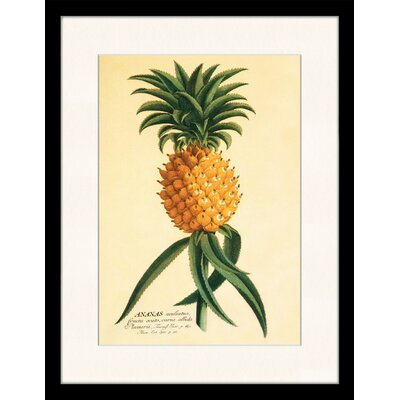 LivCorday Vintage Pineapple Framed Graphic Art