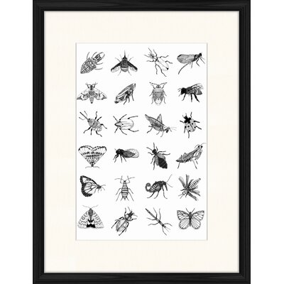 LivCorday Bugs Framed Graphic Art