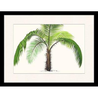 LivCorday Vintage Palm Illustration Framed Graphic Art
