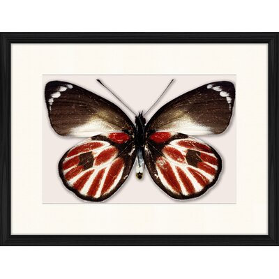 LivCorday Butterfly Series 20 Framed Graphic Art