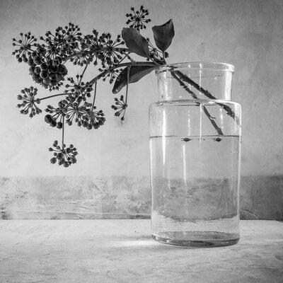 David & David Studio 'Vase And Ivy 1' by Laurence David Framed Photographic Print