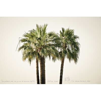 David & David Studio 'Palms 1' by Philippe David Framed Photographic Print