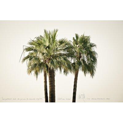 David & David Studio 'Palms 1' by Philippe David Photographic Print