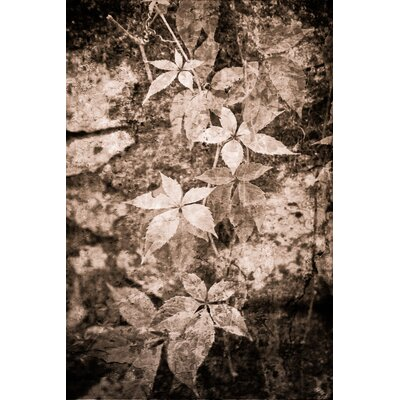 David & David Studio 'Ivy Shadows 1' by Laurence David Framed Graphic Art
