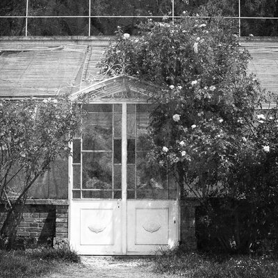 David & David Studio 'Small Greenhouse 3' by Laurence David Framed Photographic Print
