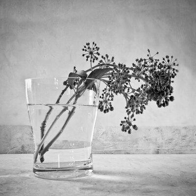 David & David Studio 'Vase And Ivy 2' by Laurence David Framed Photographic Print