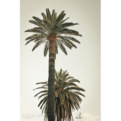 David & David Studio 'Great Palms 1' by Philippe David Photographic Print