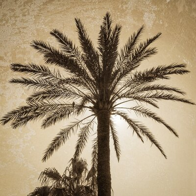 David & David Studio 'Palm Tree 3' by Laurence David Framed Photographic Print