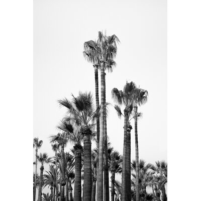 David & David Studio 'Great Palms 3' by Laurence David Framed Photographic Print