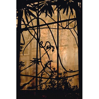 David & David Studio 'From Inside The Greenhouse 1' by Laurence David Photographic Print