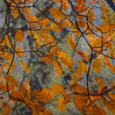 David & David Studio 'Golden Foliage' by Laurence David Framed Graphic Art