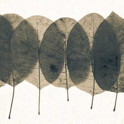 David & David Studio 'Pressed Leaves 1' by Philippe David Framed Graphic Art