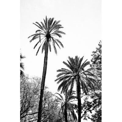 David & David Studio 'Great Palms 2' by Laurence David Framed Photographic Print