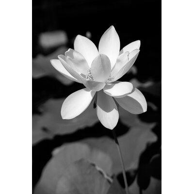 David & David Studio 'Lotus 1' by Laurence David Framed Photographic Print
