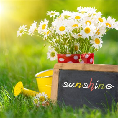 Pro-Art Glasbild Sunshine, Kunstdruck