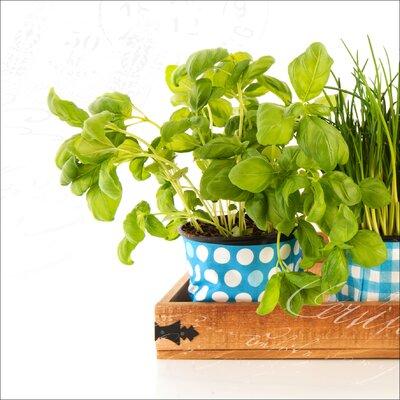 Pro-Art Glasbild Colourful Herbs I, Kunstdruck