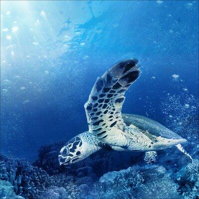 Pro-Art Glasbild Blue Sea I, Kunstdruck
