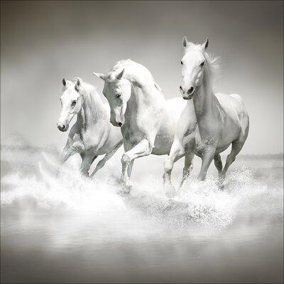 Pro-Art Glasbild White Horses, Kunstdruck