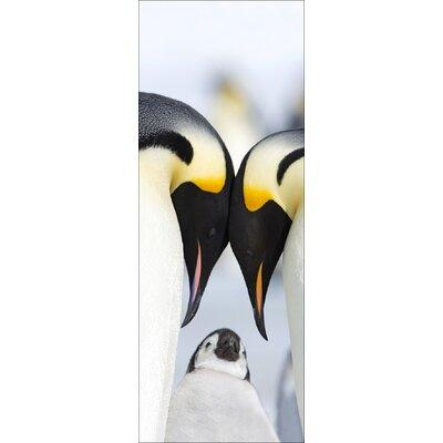 Pro-Art Glasbild 3 Penguins, Fotodruck