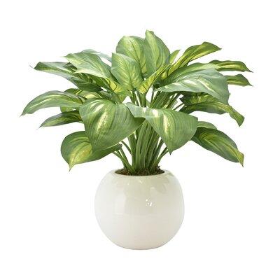Hosta Floor Foliage Plant in Pot Base Color: White