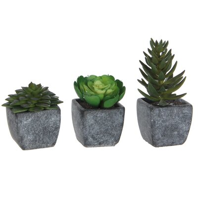 Borough Wharf 3 Piece Succulent Plant in Pot