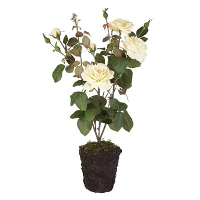 Lene Bjerre Rose Floor Plant