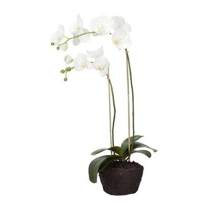Lene Bjerre Decorative Flower Plant