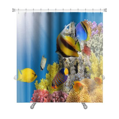 Fish Coral Colony on a Reef Top, Sea, Egypt Premium Shower Curtain