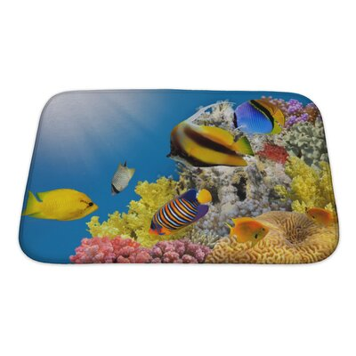 Fish Coral Colony on a Reef Top, Sea, Egypt Bath Rug Size: Small