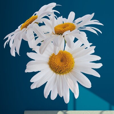 Crearreda Home Decor Line Super Daisies Wall Sticker
