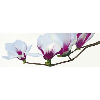 """DEInternationalGraphics """"Magnolia"""" von Stephanie Andrew, Fotodruck"""