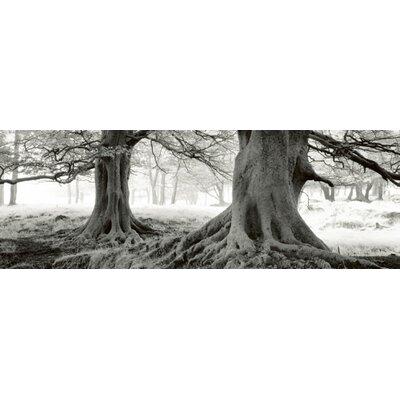 """DEInternationalGraphics """"Exmoor - DeKunstdruck von - England"""" von Helmut Hirler, Fotodruck"""